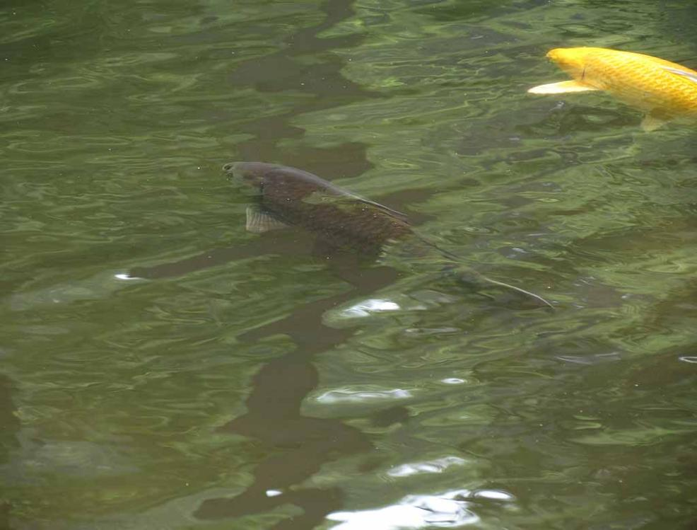 Spring in holmdel park in new jersey for 1041 the fish