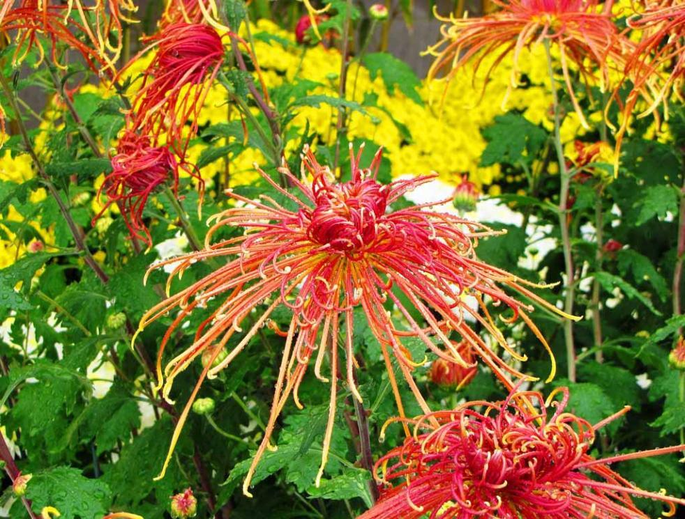 http://www.shltrip.com/sitebuilder/images/6s_New_York_Botanical_Garden_093-982x745.jpg