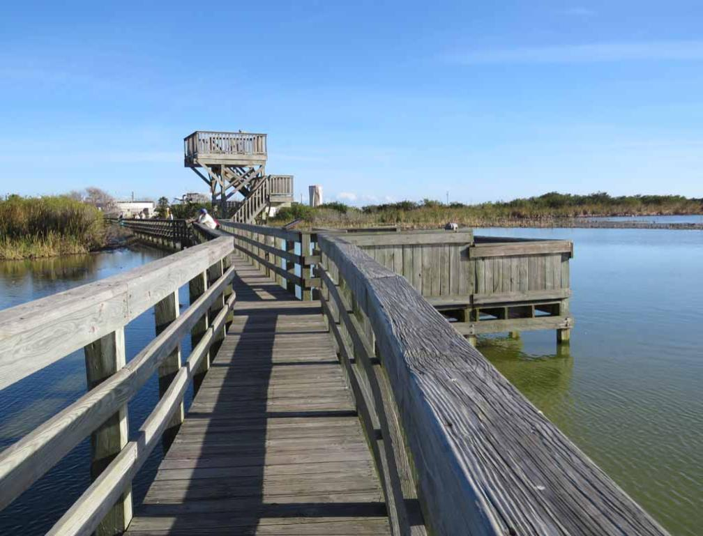 Boardwalk and Observation tower