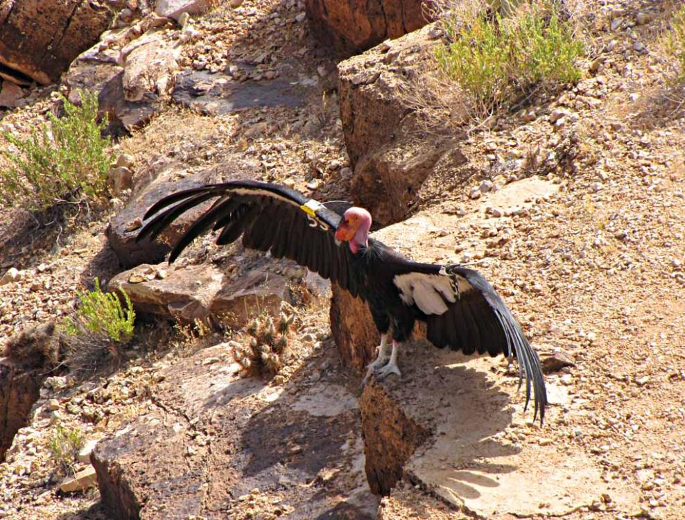 http://www.shltrip.com/sitebuilder/images/6s_condor_with_extended_wings-v1_IMG_2641-988x750.jpg