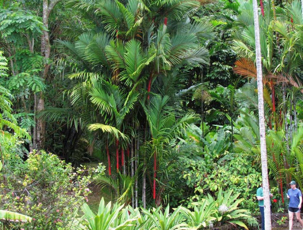 Fantastic hawaii island cruise part 1 island of oahu for Foster botanical garden honolulu