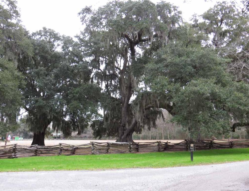 Magnolia Plantation And Gardens Near Charleston In South Carolina