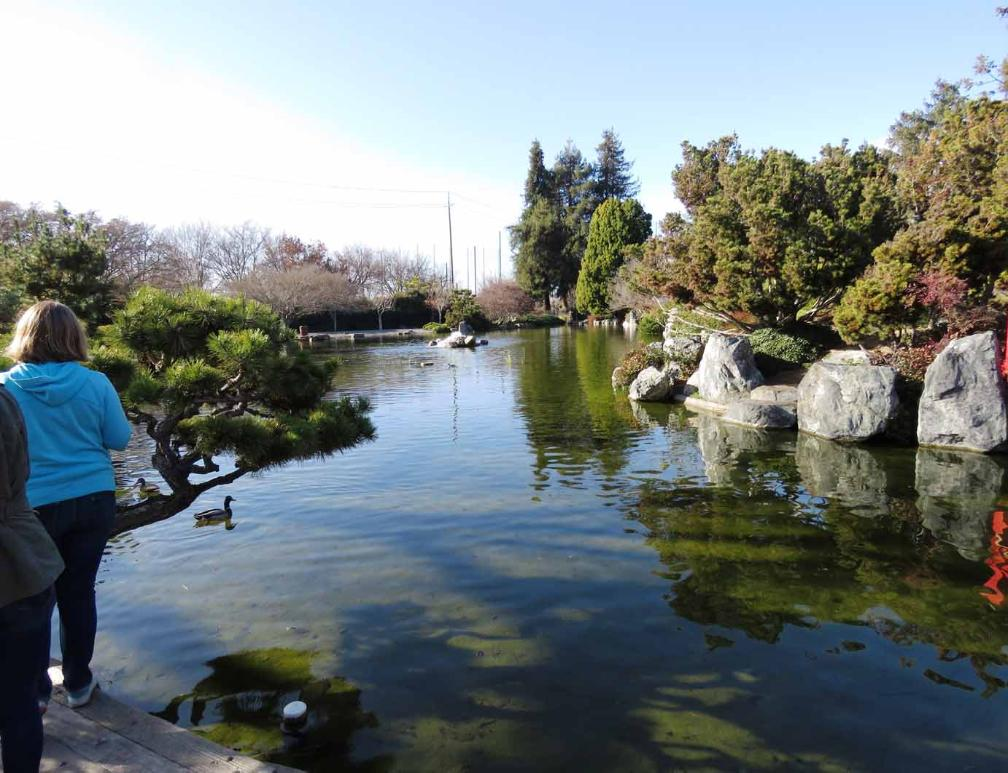 One Of Three Koi Ponds In The Beautiful And Tranquil Japanese Friendship  Garden Located In Kelley Park, At 1300 Senter Rd, San Jose, California  95112.
