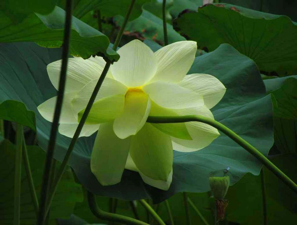 Lotus And Other Beautiful Flowers In Princeton New Jersey