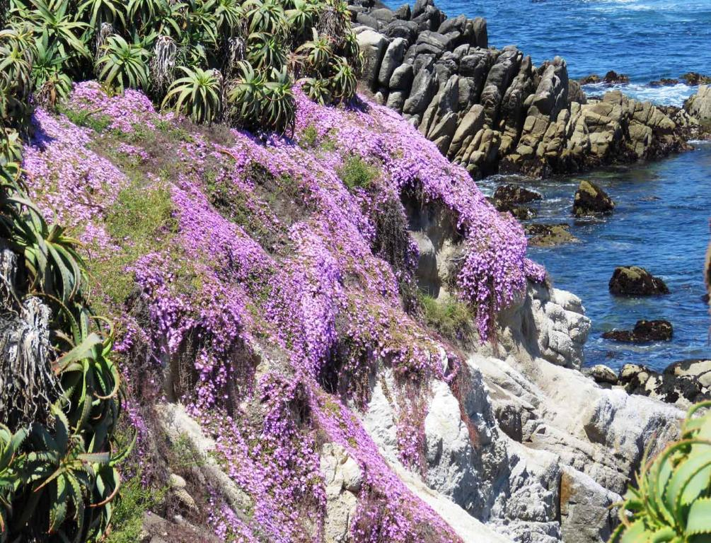 Breathtaking Rocky Shore of Pacific Grove at Its Best with
