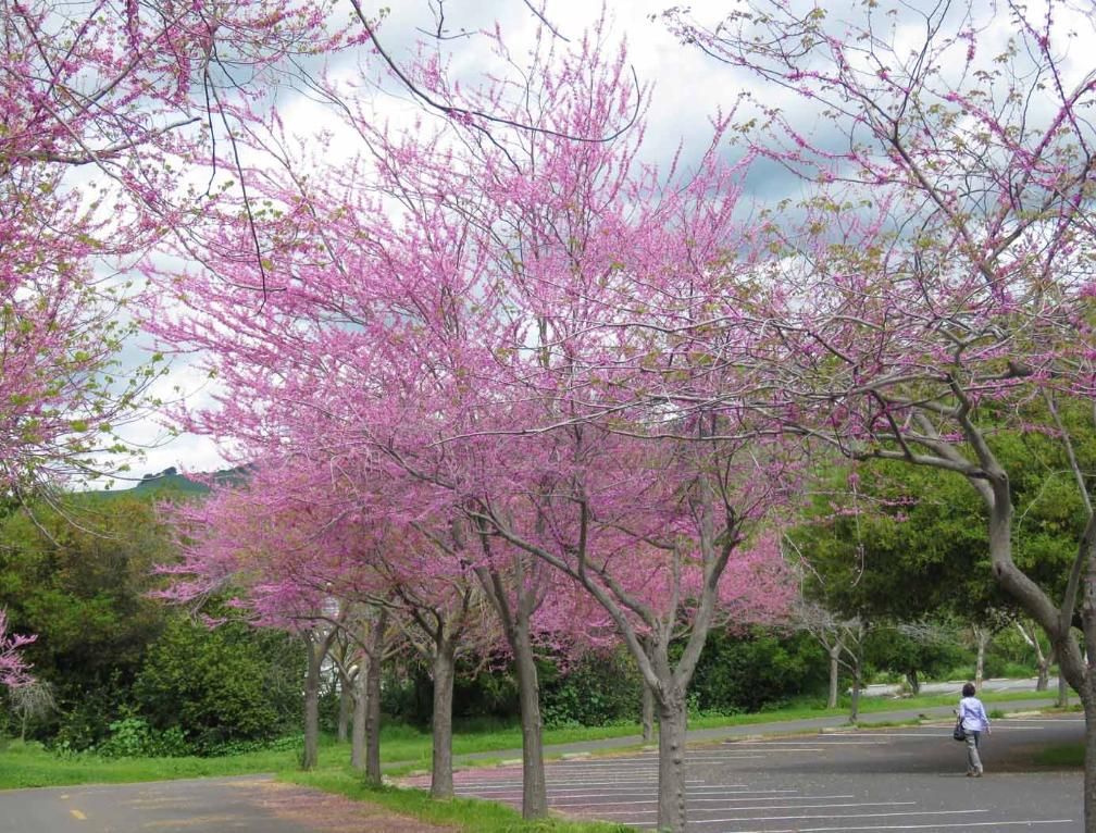2019 Spring Flowers In San Francisco Bay Area
