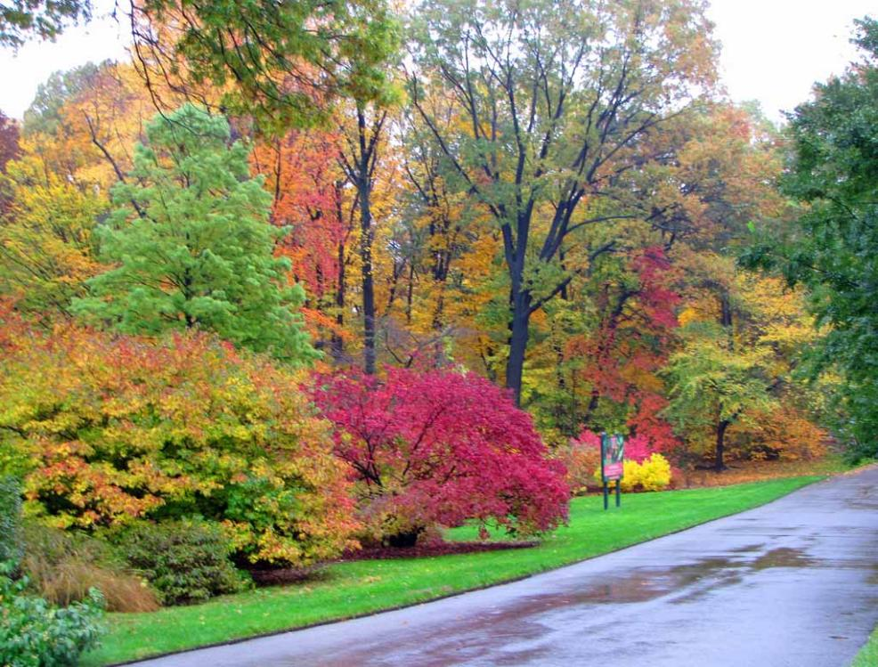 New York Botanical Garden In Autumn