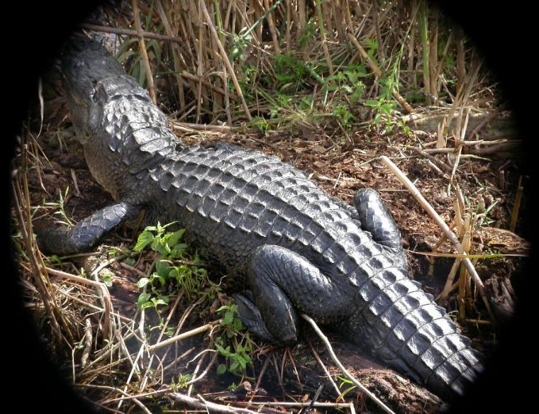 Everglades National Park. of Everglade National Park